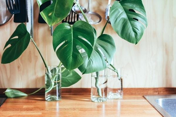 Odnowienie kuchni tanim kosztem - rady odKuchnie Pinio - kwiaty irośliny